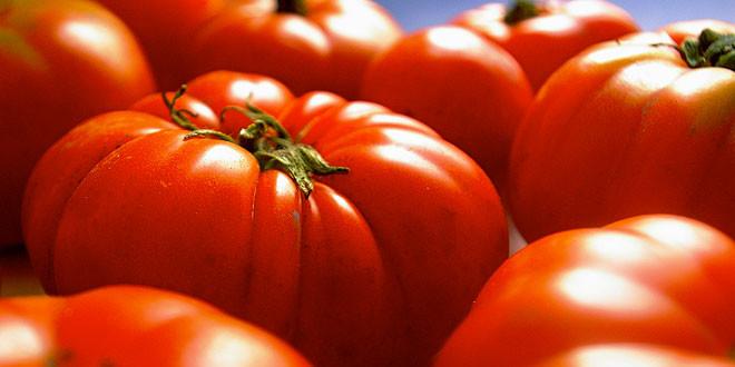 tomate-acopaex