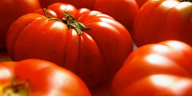 retraso-cultivo-tomate
