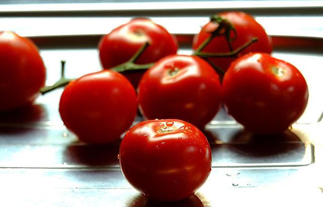 tomate-de-industria-acopaex