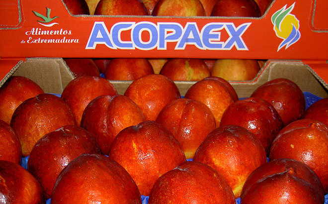 fruta-de-hueso-acopaex