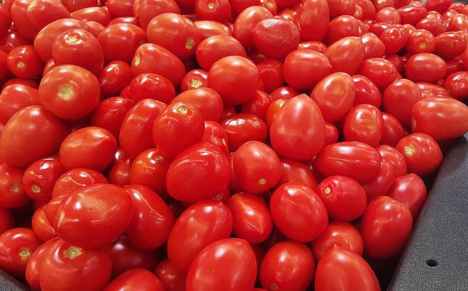 tomate-extremadura