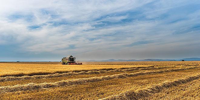 cosecha-maiz