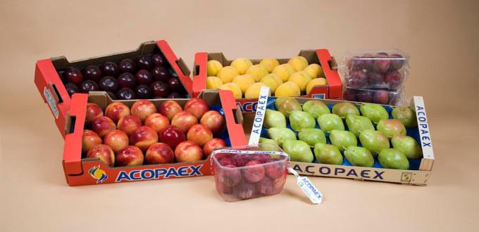 frutas acopaex
