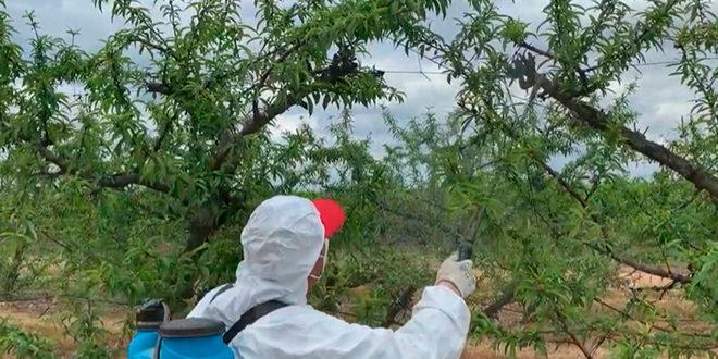 Fruitcare - Tratamientos alternativos a plaguicidas y fungicidas